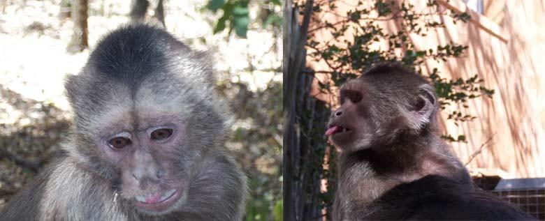 Monkey Sanctuary – Ekala Eco Tours