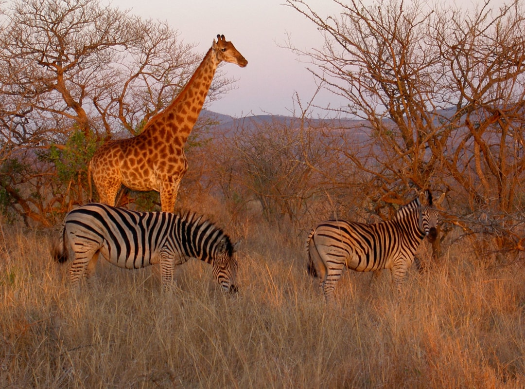 Wildlife within Pilanesberg, adjacent to Sun City