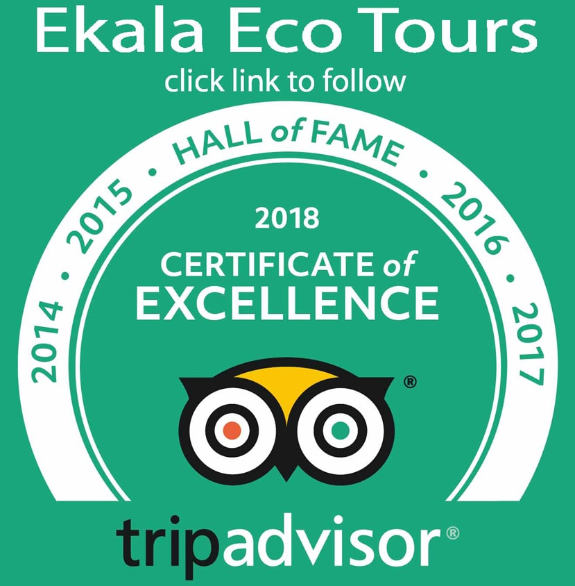 Trip link - Ekala Eco Tours