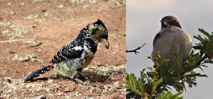 Ekala Birding Ecotours